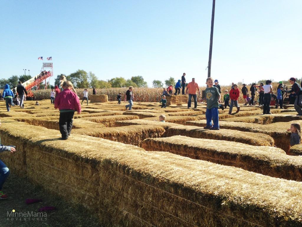 Severs Corn Maze and Fall Festival - MinneMama Adventures
