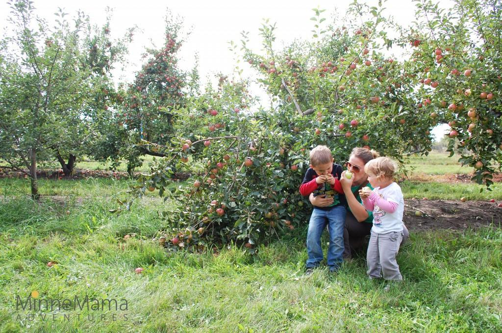 Sponsels Minnesota Harvest Apple Orchard